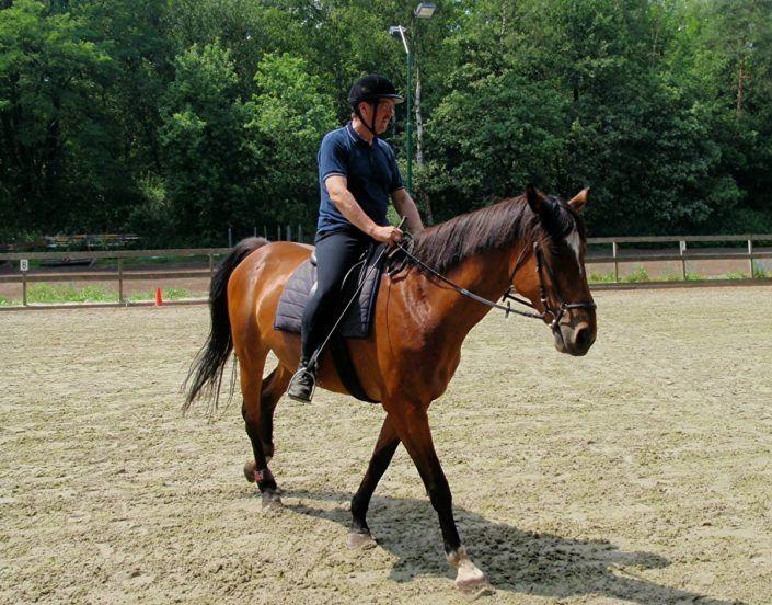 Paardrijden tijdens een bedrijfsuitje in Gelderland
