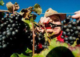 Bedrijfsuitje wijngaard