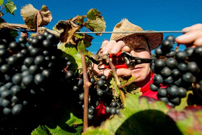 Bedrijfsuitje wijngaard in Gelderland