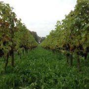 Cultureel uitje wijngaard Dieren in Gelderland