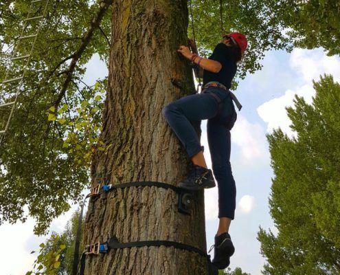 Monkey Tree Climbing tijdens een personeelsuitje in Gelderland