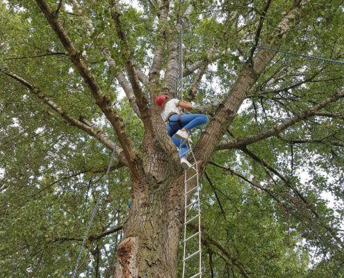 Activiteit Monkey Tree bij een uitje in Gelderland